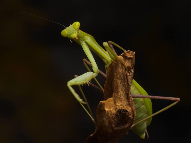 En grønn kneler på en trestubbe