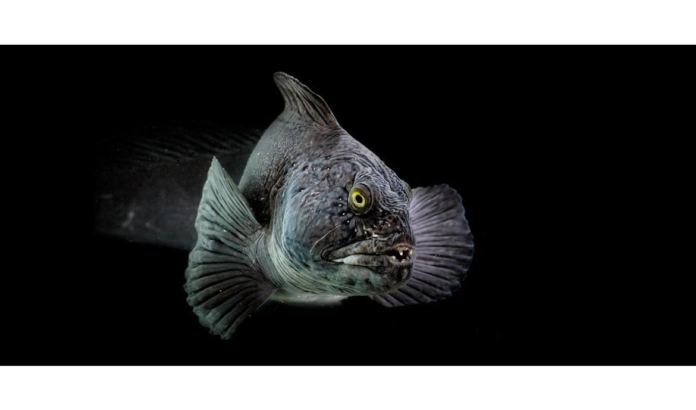 Viktig akuttiltak for landets akvarier i Revidert nasjonalbudsjett 2020!
