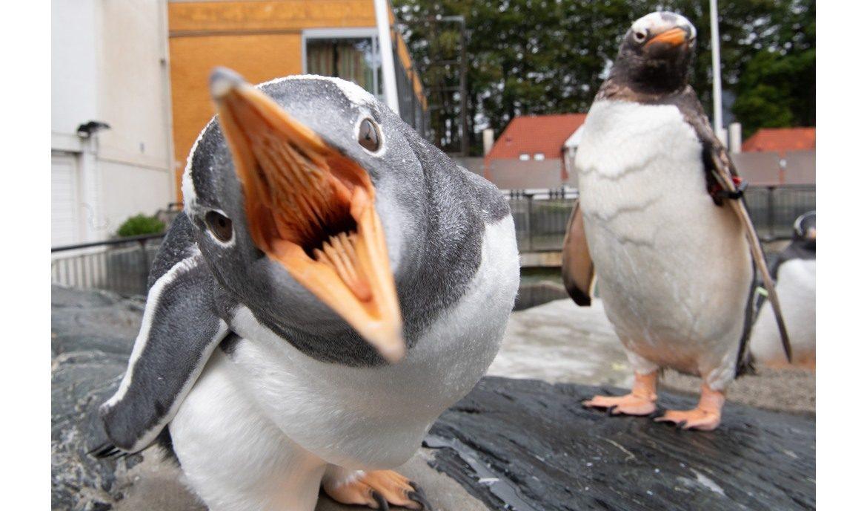Smittevernstiltak på Akvariet i Bergen