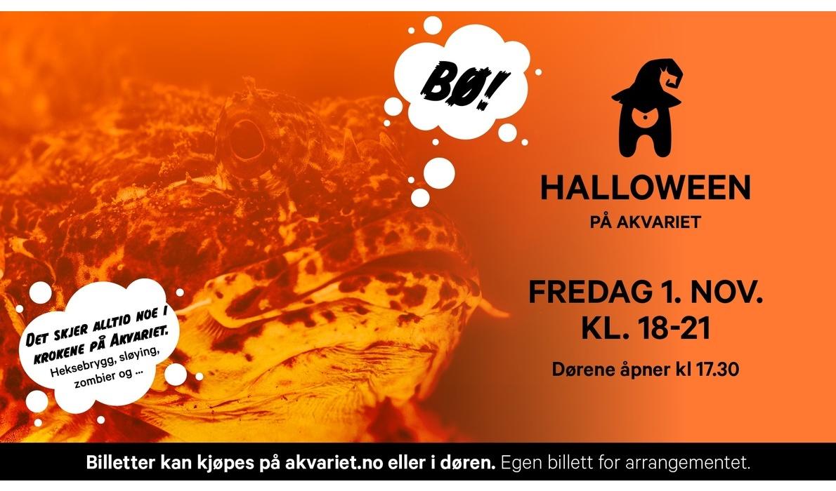 Bli med på Halloweenfeiring på Akvariet!