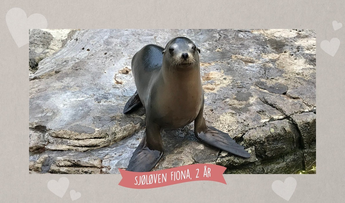 A small sea lion diva has moved into the Aquarium!