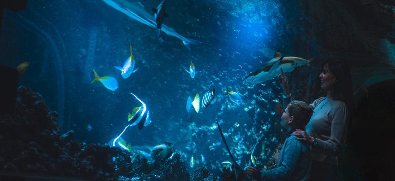 Opplevelsesgave i Bergen: Akvariets årskort