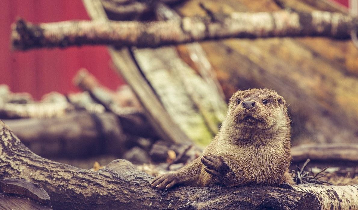 Filmen Tett på dyrene på Akvariet