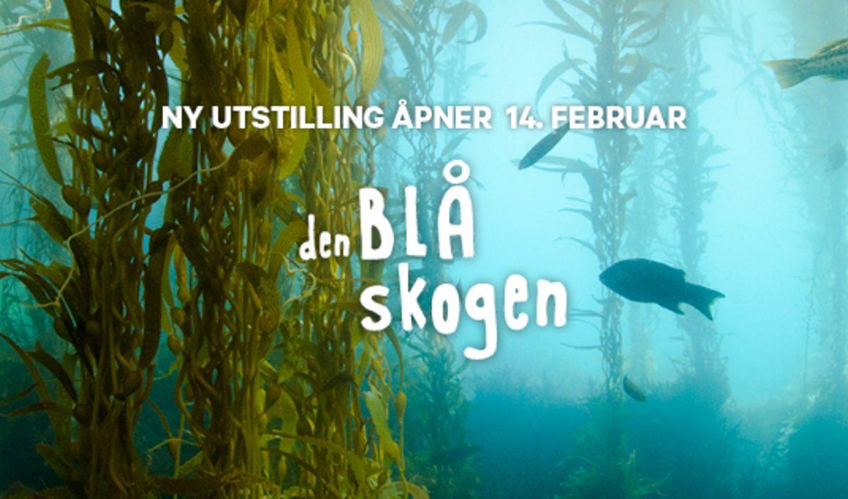 Utstillingen - Den blå skogen - regnskogen under vann