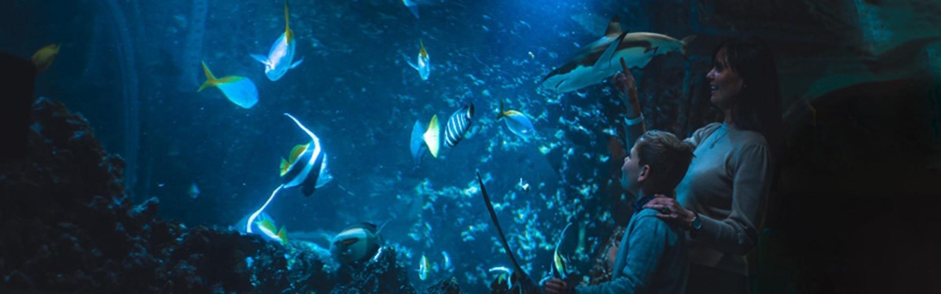 Haitunellen Akvariet i Bergen