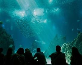 Finansieringen av forstudiet til Nye Akvariet godt i gang!