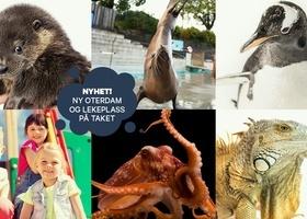 Sommer på Akvariet