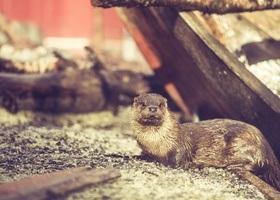 News from Bergen Aquarium