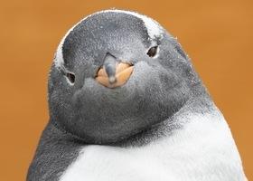Velkommen til åpning av pingvindammen tirsdag 25. februar kl 11.00!