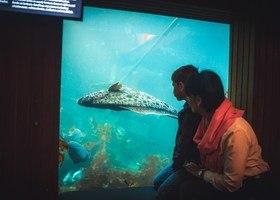 Høstferie i Bergen og på Akvariet i Bergen