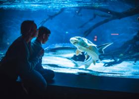 Slik blir høstferien på Akvariet i Bergen