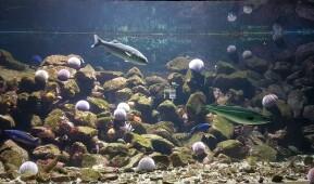 Livet i havet, fisk som svømmer rundt