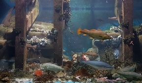Torsk og annen fisk under en brygge