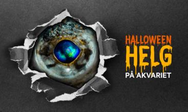 Halloweenhelg på Akvariet