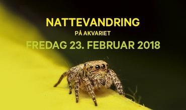 Vinterferie i Bergen? Bli med på nattevandring på Akvariet