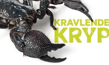 Kravlende Kryp tilbake på Akvariet i Bergen