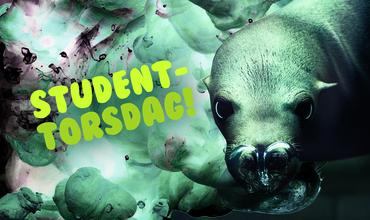 Lider du av studentkro-trøtthet?
