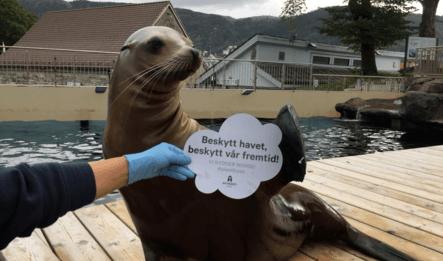 Kampen mot plastavfall i havet