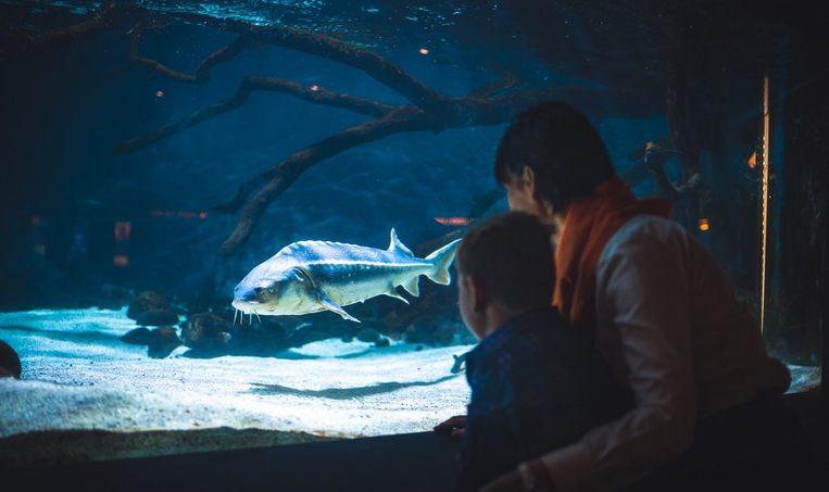 Status fra Stiftelsen Akvariet i Bergen