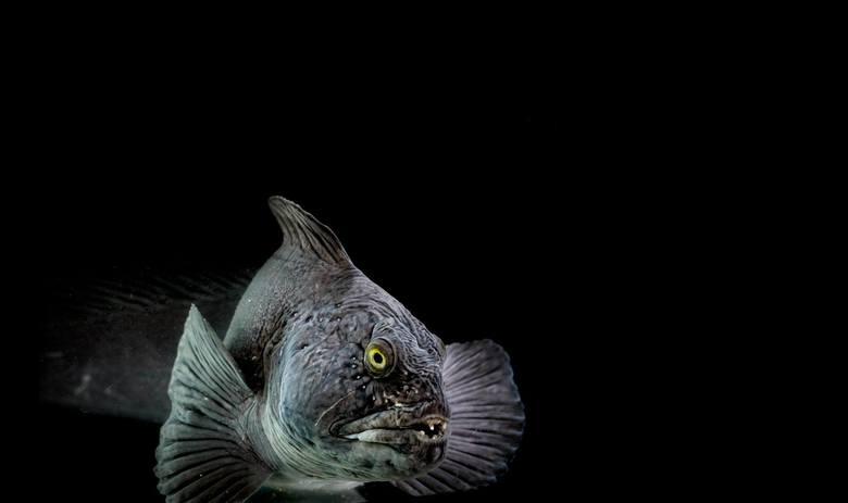 Fiskefôring i Rotunden