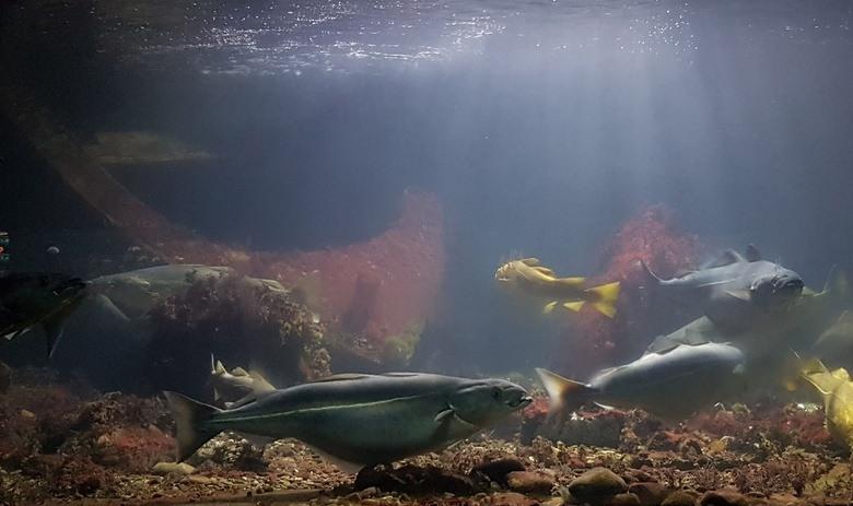 Bli med å se når fiskene i havakvariet får mat