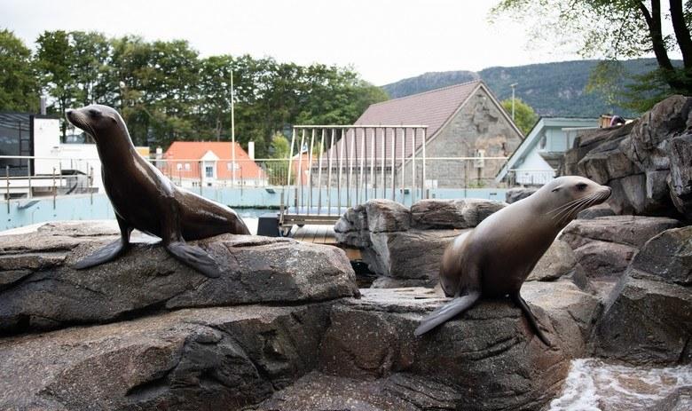 Sea lion presentation