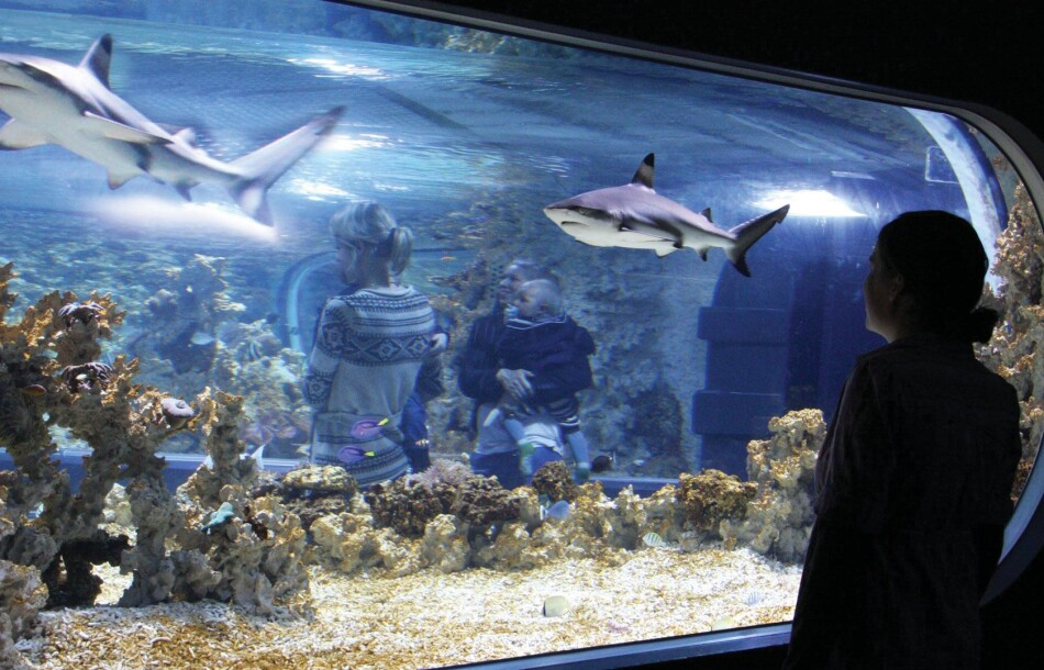 Haier i akvariet på Akvariet i Bergen