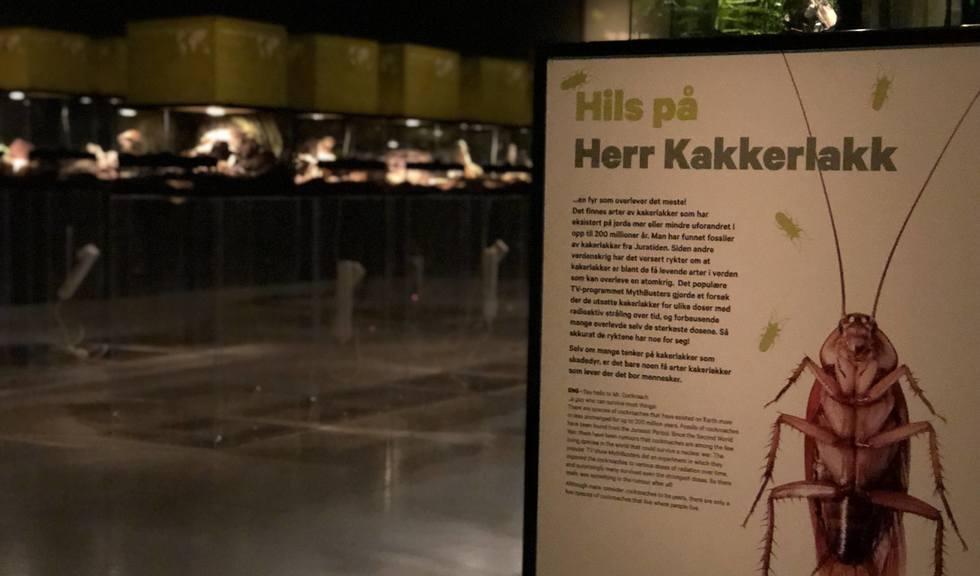 Fra utstillingen i Bodø