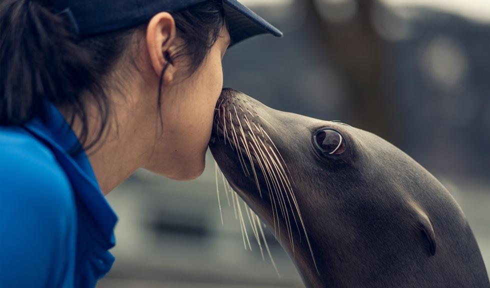 Sjøløven kysser dyrepasser på Akvariet i Bergen