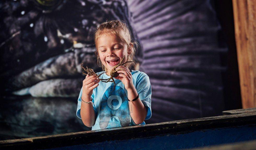 Ung jente som holder to små krabber i hendene sine