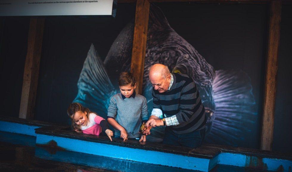 Bestefar og barnebarn titter oppi et akvarie