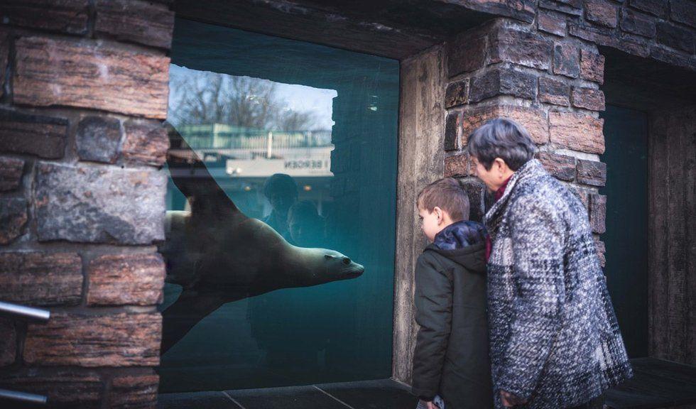 Barnebarn og bestemor ser på selv gjennom akvariet