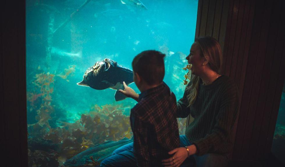 Mor og sønn ser på en fisk som svømmer i akvariet