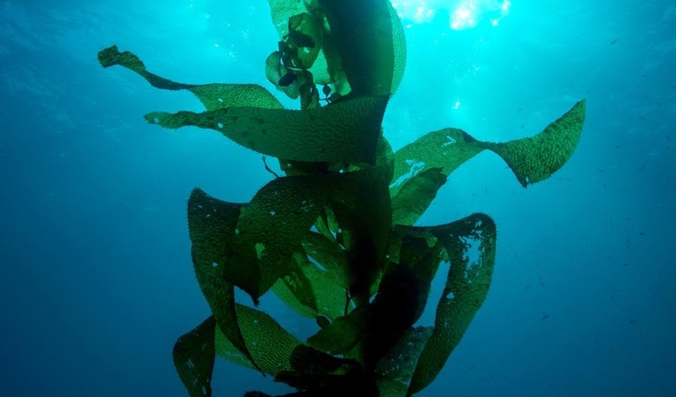 Tare under havoverflaten